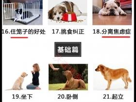 怎么训练出听话的狗狗(宠物狗训练方法视频教程)